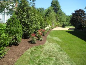 tree services westport, CT