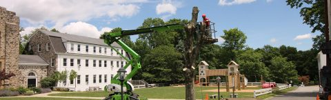 Award Winning Tree Service